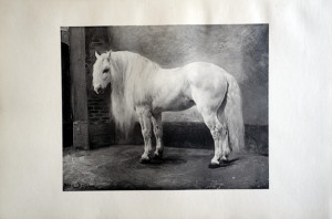 4 - Rosa bonheur (1822 - 1899) Le cheval blanc
