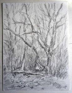 2009 dessin crayon signé A.P.  daté titré dos 31122009 Bois de la Trappe format 32x24