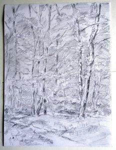 2013 dessin crayon signé A.P. daté titré dos 25042013 Bois de la Trappe