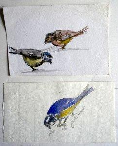 31 Etude d'oiseaux non signée format  16x12 et 10x9