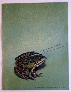 La grenouille - recto
