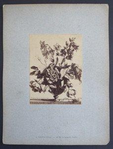 sur cartonnette Nicolas de Poilly format 34x 26
